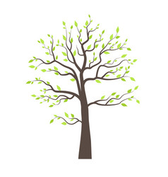 trees with leaves vector image vector image