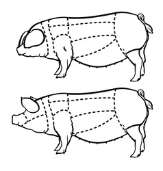 Hand drawn outline pig vector image