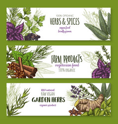 Spices and herbs banners for shop vector