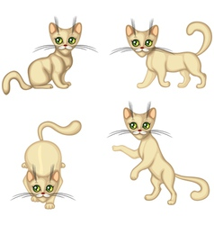 Kitten in different poses vector image vector image