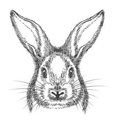 vintage hand drawn bunny face sketch vector image
