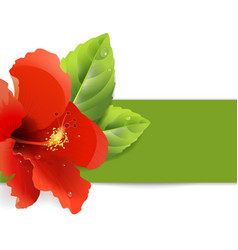 floral background with hibiscus vector image vector image