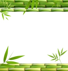 Green bamboo grass isolated on white vector