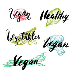 healthy vegetable hand drawn lettering set vector image vector image