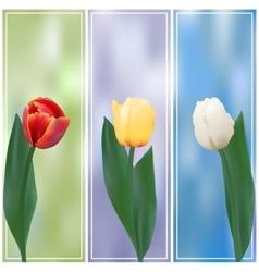 Three tulips banner vector image