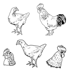 Chicken siluet vector