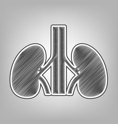Human anatomy kidneys sign pencil sketch vector
