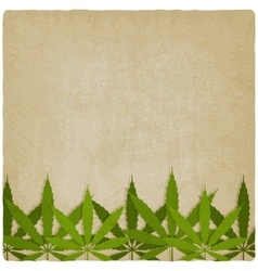 marijuana leaves on grunge background vector image
