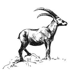 Hand sketch Capricorn vector image