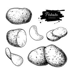 Potato drawing set isolated potatoes heap vector