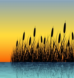 Reed silhouette with water reflection vector