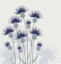 Thistles in the meadow vector