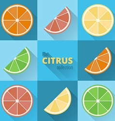 Flat icons of citrus vector