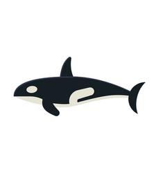 killer orca whale vector image