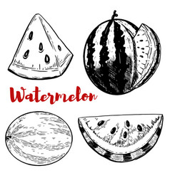 Set of hand drawn watermelon on white background vector