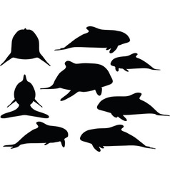 Baby animals orca silhouette vector