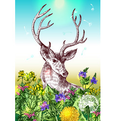 Deer and wildflowers vector