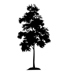 Acacia tree and grass silhouette vector image vector image