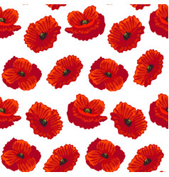 Realistic detailed flower poppy background pattern vector