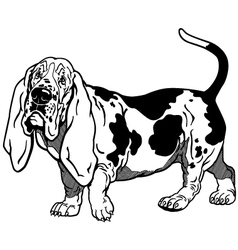 Basset hound black white vector
