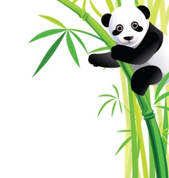 panda 041 vector image vector image