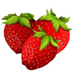 Fresh strawberries on white background vector image vector image