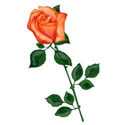 Single Orange Rose vector image vector image