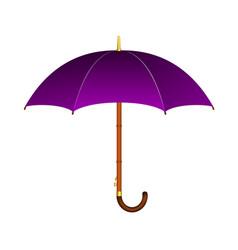 Umbrella in purple design vector