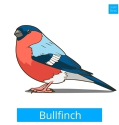 Bullfinch learn birds educational game vector