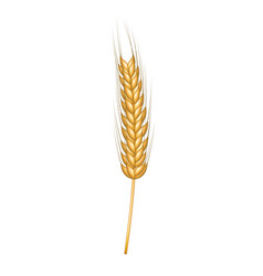 Wheat in gold design vector