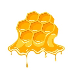 Honey flowing of bee vector