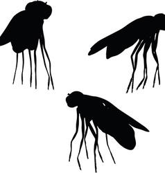 Bug fly silhouette vector