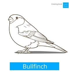Bullfinch learn birds coloring book vector