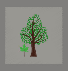 Flat shading style plant acer vector