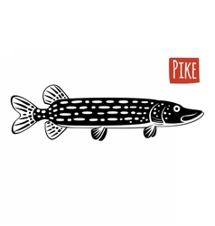 Pike black and white vector image vector image