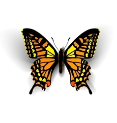 Realistic butterfly on white vector