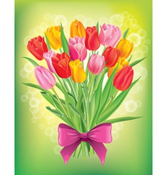 Bouquet of fresh spring tulips different colors vector