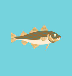 In flat style cod vector