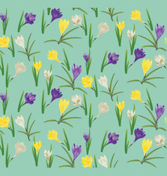 Colorful crocus flowers vector