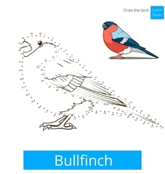 Bullfinch bird learn to draw vector