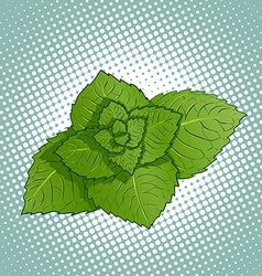 Mint leaves medicinal plant vector