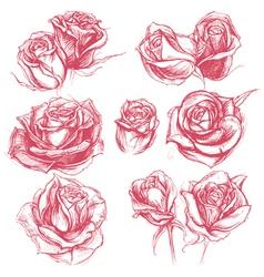 Roses Drawing Set vector image vector image