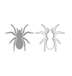 Spider or tarantula icon grey set vector