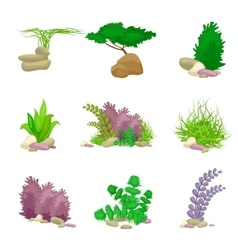 Different kinds of algae and pebbles set isolated vector