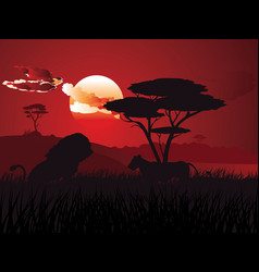 african sunset with lion vector image vector image