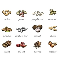 Nuts icons vector
