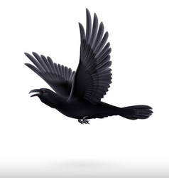 Black raven on white background vector