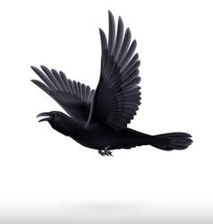 Black raven on white background vector