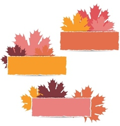 Autumn maple leaves design vector image vector image