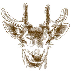 engraving of reindeer head vector image vector image
